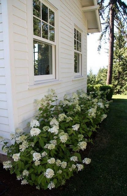 25 best hedge plants low maintenance images on pinterest for No maintenance flowering shrubs