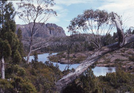 Photo taken around 1974  looking toward  the Acropolis from a very beautiful area called the Labrinth in the Cradle Mountain Lake St Claire national park.
