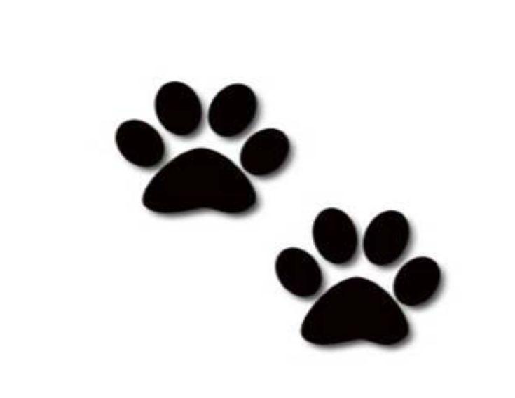 Resultado de imagem para patinhas de cães