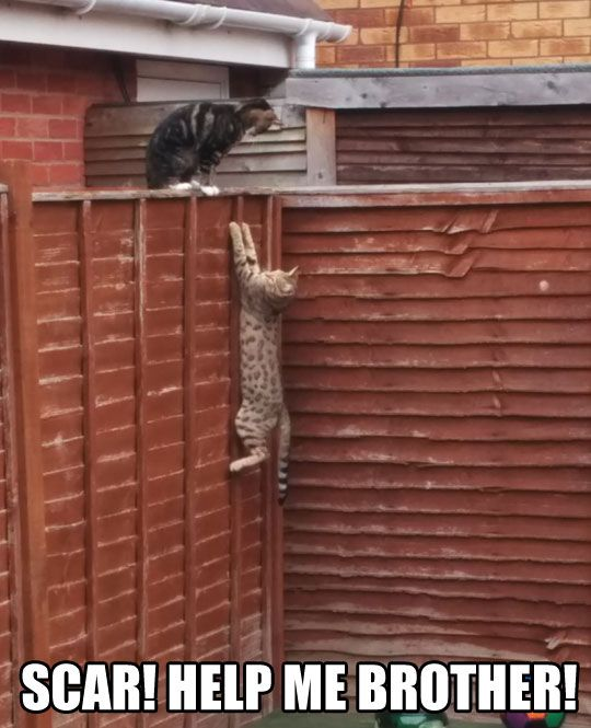 These Cats Take Their Acting Classes Pretty Seriously