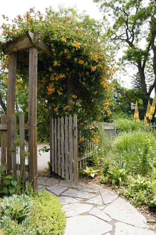A healthy honeysuckle vine greets visitors at the entry gate to a beautiful country garden.