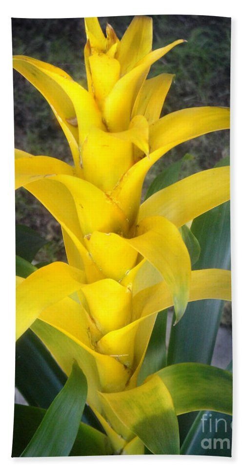 "Yellow Bromeliad Plant. Sunny Towel (Beach Towel (32"" x 64"")) by Sofia Metal Queen. Our towels are great."