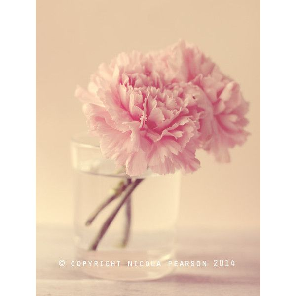 stilllife photography print, flower photo, pink carnation, fine art... (19 AUD) ❤ liked on Polyvore featuring home, home decor, wall art, pink wall art, photography wall art, pink floral wall art, flower wall art and floral wall art