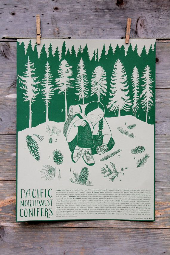 Pacific Northwest Conifer Identification Poster by TheFarWoods
