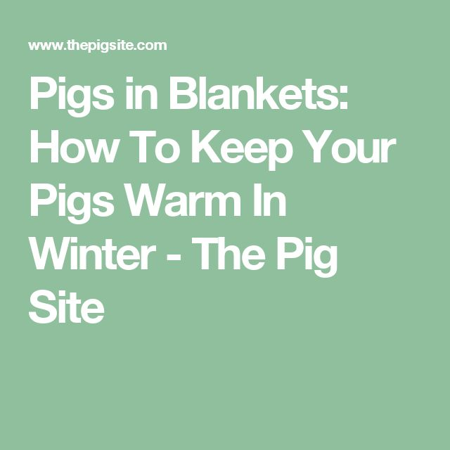 Pigs in Blankets: How To Keep Your Pigs Warm In Winter - The Pig Site