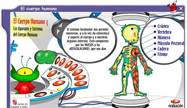 juego del cuerpo humano