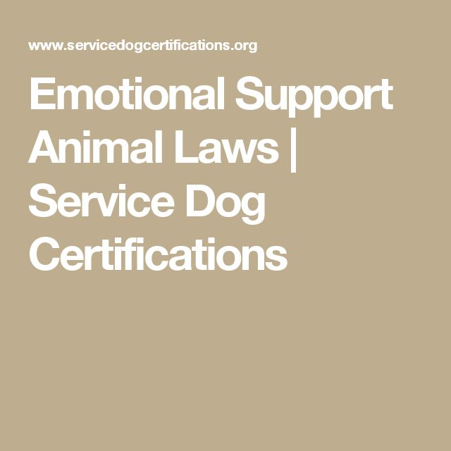 Emotional Support Animal Laws | Service Dog Certifications