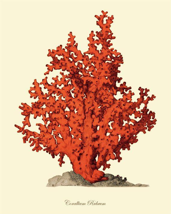 Sea coral art - Vintage print by AntiqueWallArt on Etsy #red