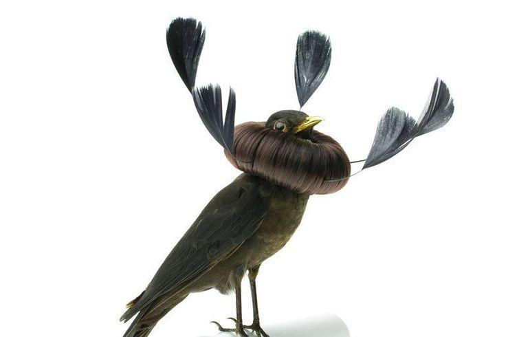 Burung cantik 2 (Karleyfeaver.com)