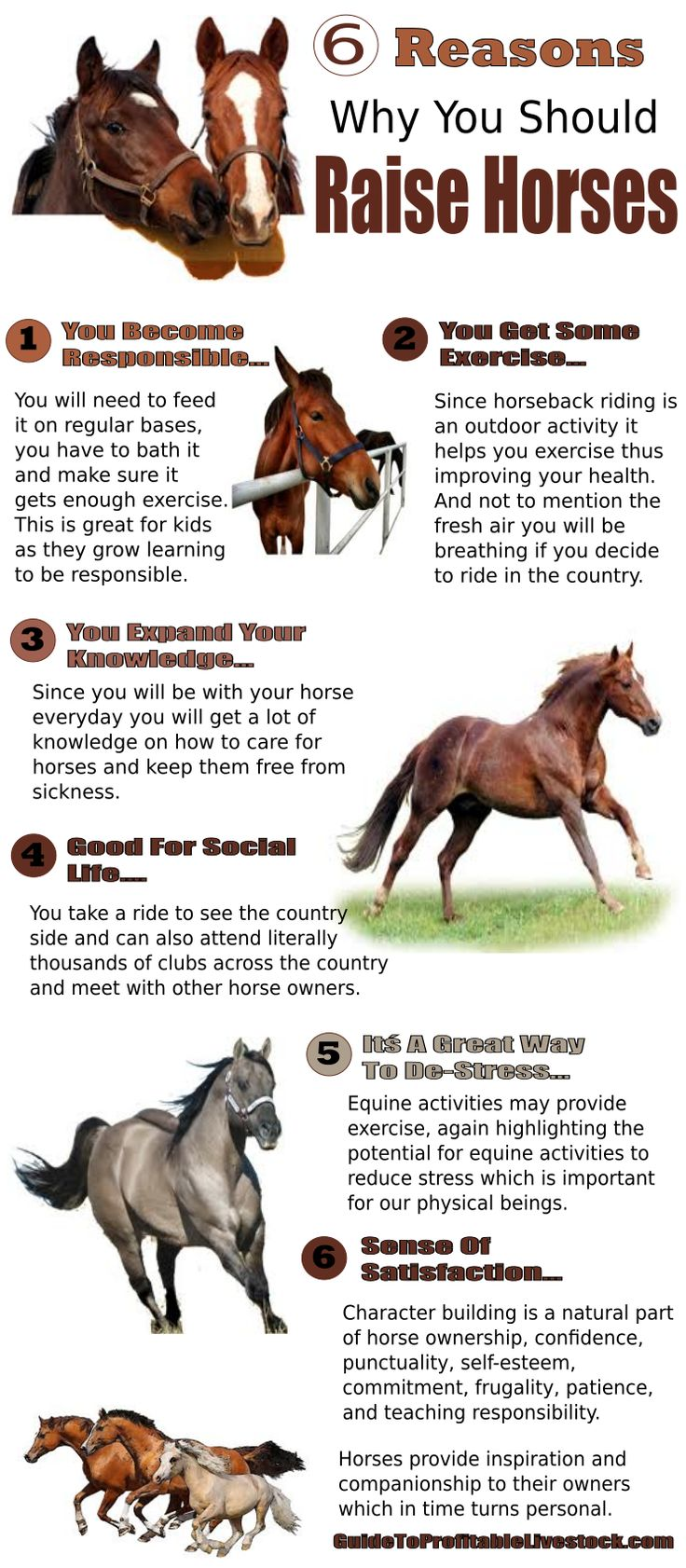 Six Reasons To Raise Horses | Livestock Farming For Beginners