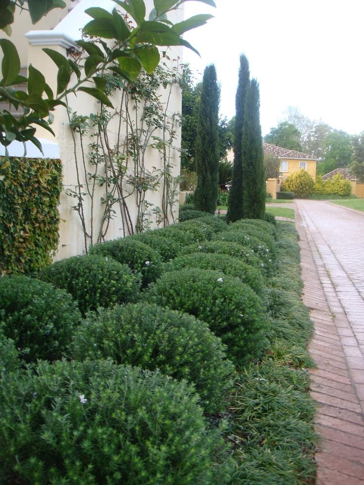 17 best images about lavender blue landscapes  designed and installed  fatima behardien on