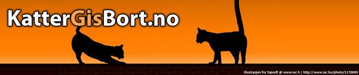 Som det kommer frem i navnet er denne katten opprinnelig fra ... #katter #rasekatt #dyr #fakta