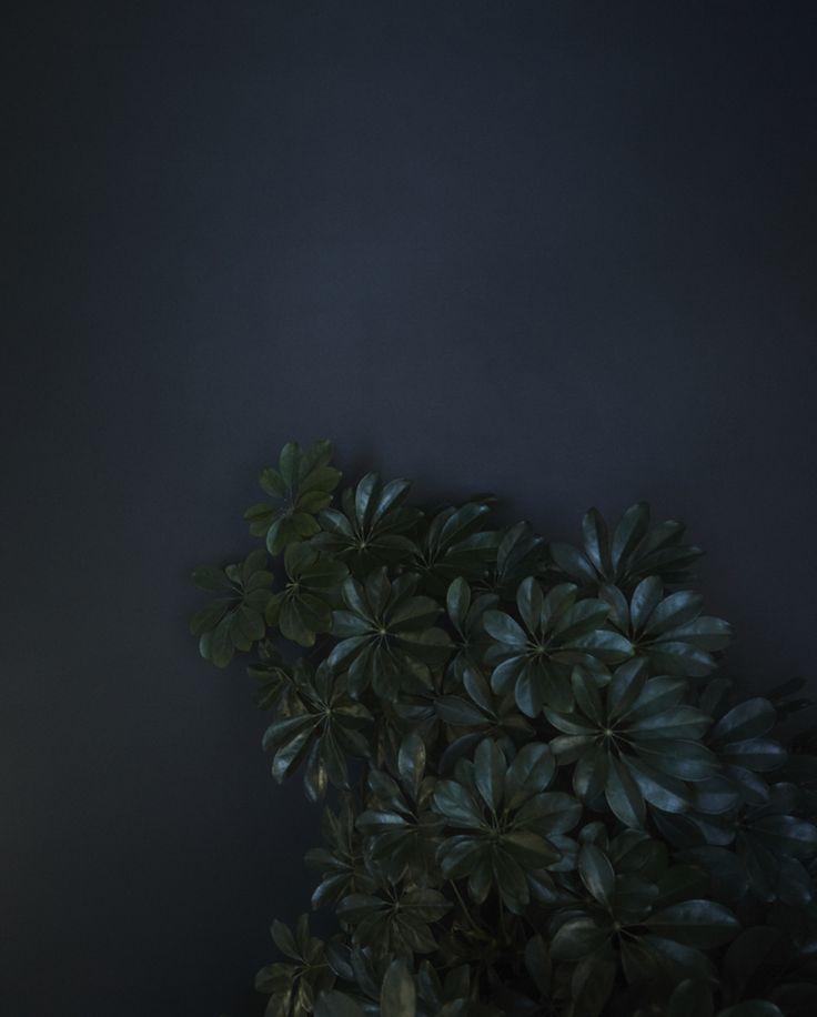 a midnight blue