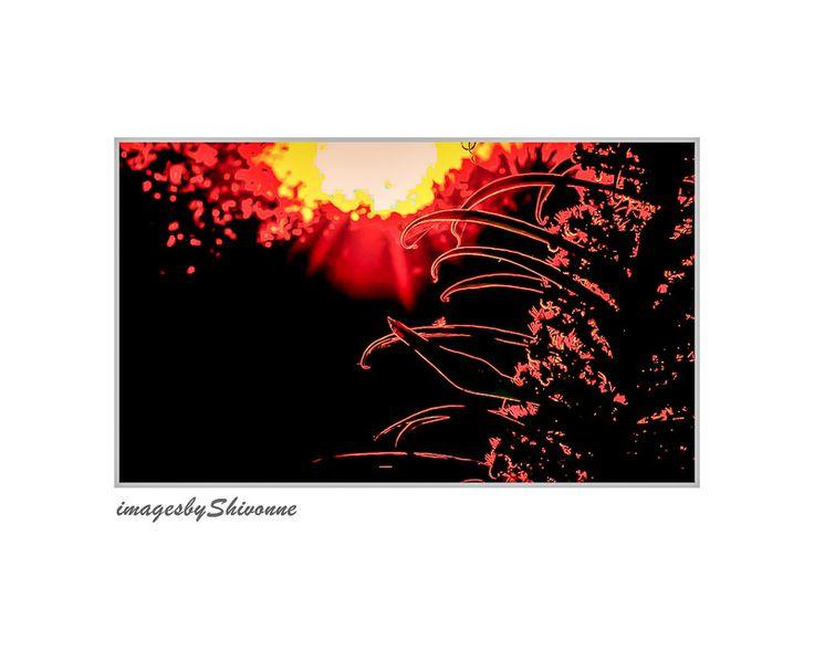 #christchurch #sunset  Sun setting in a garden in South New Brighton, Christchurch