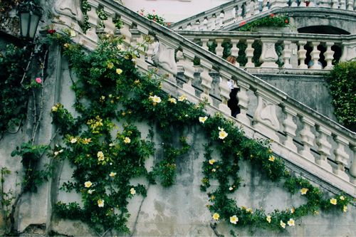 They blossomed onto the side of the marble staircase, growing up and teasing the handrail.