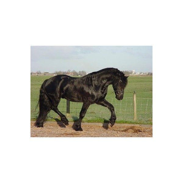 Cavalo Bretão ❤ liked on Polyvore