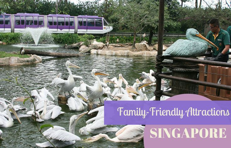 A round-up of Singapore's best family friendly attractions, including SIngapore Zoo and Universal Studios.