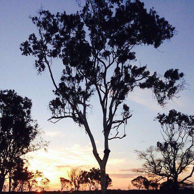 Sundown. Northbound on the Bruce Highway. Love North Queensland!  #lolomajewellers #northqueensland #queensland #australia #sunset