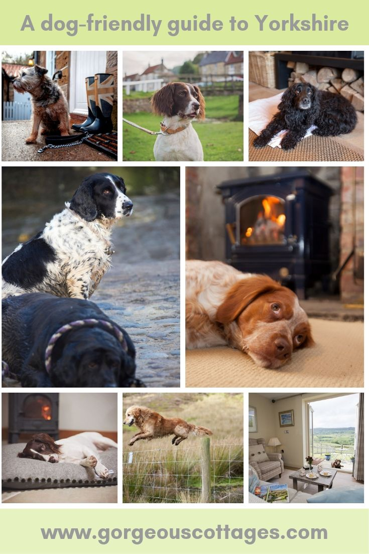 Discover Yorkshire S Dog Friendly Pubs Walks And Attractions Dogfriendly Yorkshire Takethedog Mansbestfriend With Images Dog Friends Yorkshire Dog Dogs