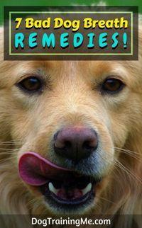 bad dog breath remedies