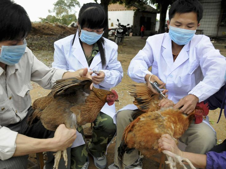 A mutated version of the bird flu virus, named H10N8, has proved fatal for a 73-year-old woman in China, who died on Dec. Description from guardianlv.com. I searched for this on bing.com/images