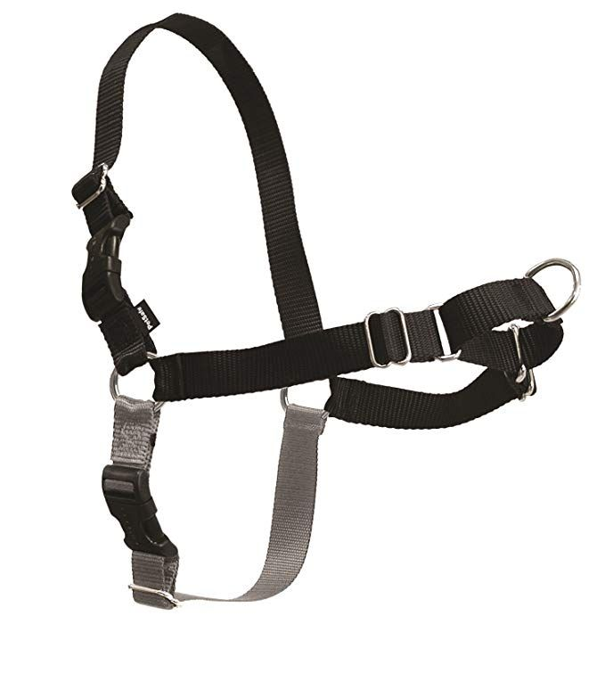 Amazon Com Petsafe Easy Walk Harness Large Black Silver For