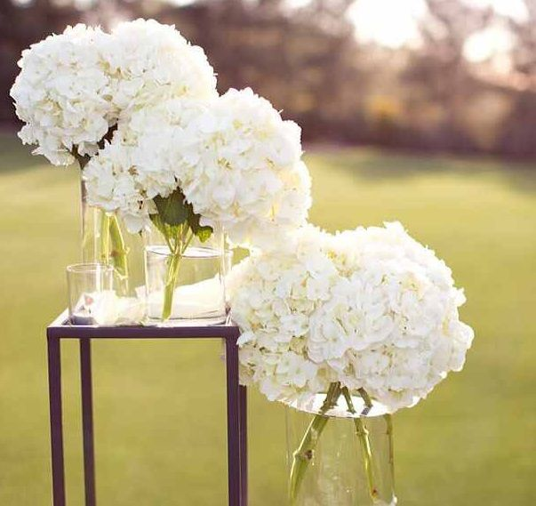 Beautiful Hydrangea flowers super low price! http://www.bliss-bridal-weddings.com/#!product/prd3/3346991991/5-bunches-of-hydrangeas  #hydrangea #wedding #wedding flowers #centerpieces