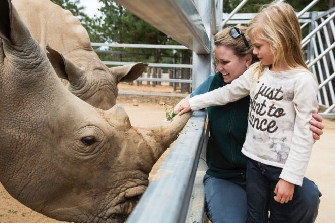 There's not many places in the world left where you can pat a white rhino, but Jamala Wildlife Lodge  in Canberra zoo is one of them. Read all about it at http://www.suitcasesandstrollers.com/articles/view/family-friendly-accommodation-jamala-wildlife-lodge-canberra?l=all #GoogleUs #suitcasesandstrollers #travel #travelwithkids #familytravel #familytraveltips #traveltips #rhino #upclose #meetandgreet #onceinalifetime