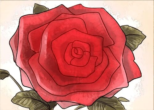 instructions to draw a rose