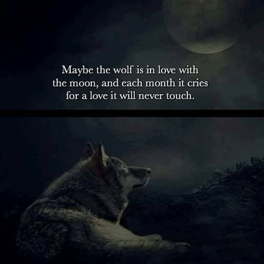 Cool Sayings About Moon: 25+ Best Wolf Quotes On Pinterest