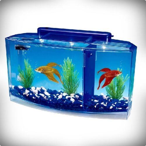 25 best ideas about betta aquarium on pinterest betta for Fish tank dividers