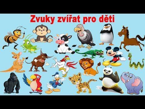 zvuky zvířat pro děti (50 zvířat ze zoo ,zvířat z lesa, zvířat v lese, hospodářských zvířat) - YouTube
