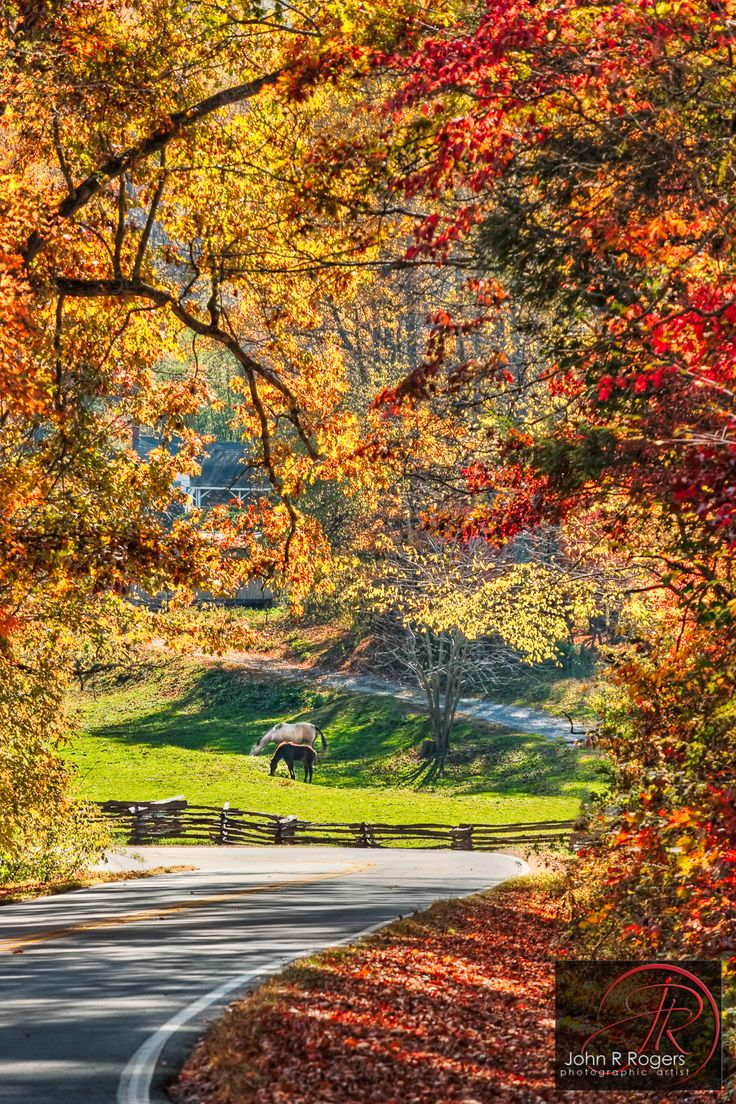 From the book where you might see the beautiful autumn leaves - Beautiful Fall Leaves North Carolina Back Roads