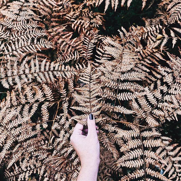 #AutumnVibes  . . . . . . . . . . #darlingmoment #beautyinsimplicity #aquietstyle #embracingtheseasons #underthefloralspell #myeverydaymagic #searchwandercollect #botanicalpickmeup #thehappynow #momentsofmine #nothingisordinary #kinfolklife #inspiremyinstagram #theartofslowliving #pursuepretty #botanicaldreamers #flowerstagram #aflowerenthusiast #dsfloral #vscoflowers #flashesofdelight #thatsdarling #byarrangement #astilllifestyle #tv_stilllife #curated_nature #petalsandprops #autumncolors…