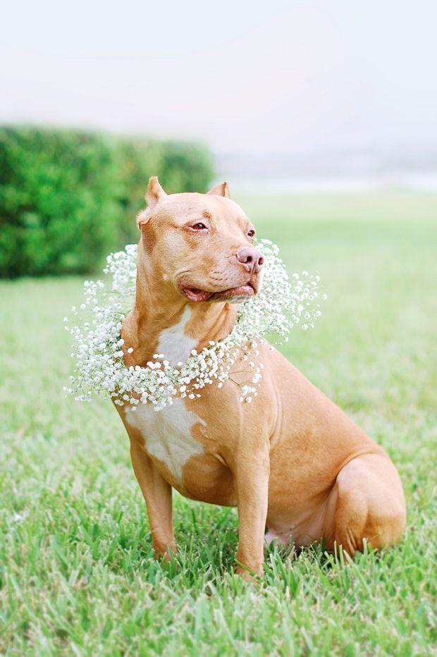 DIY: Floral Dog Wedding Wreath   Pretty Fluffy   www.prettyfluffy.com