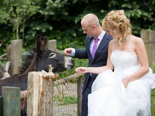 Defend the Trend: Donkeys at Weddings, Yay or Bray? (http://blog.hgtv.com/design/2014/06/20/donkey-wedding-trend/?soc=pinterest)Ideas, Wedding Trends, Donkeys Trends, Wedding'S Engagement, Hors Slaughter, Things