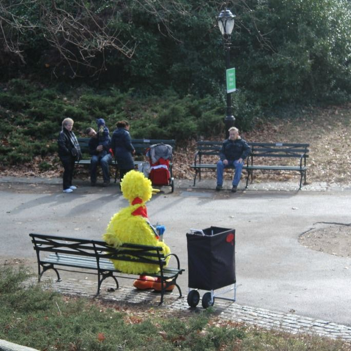 Big Bird loves Central Park as well.  Only in New York.