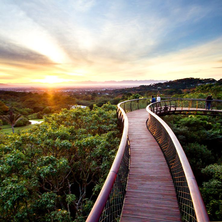 Kirstenbosch Centenary Tree Canopy Walkway, Cape Town, South Africa / Ботанический сад Кирстенбош, Кейптаун, ЮАР