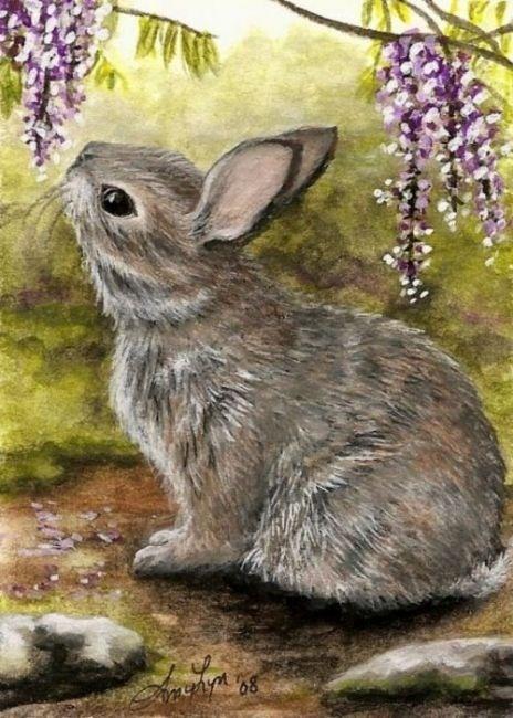 Cottontail Rabbit ArT Bunny Nature Wildlife Wonder Wisteria - BiHrLe Print                                                                                                                                                                                 More