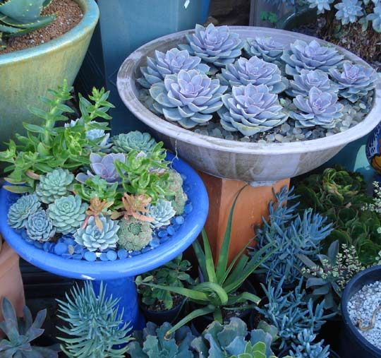 I love succulents...'cause they look great & are so hard to kill!: Gardens Ideas, Gardens Ponds, Outdoor Ideas, Succulents Container, Birdbaths Planters, Cute Ideas, Flowers Beds, Birds Bath,  Flowerpot