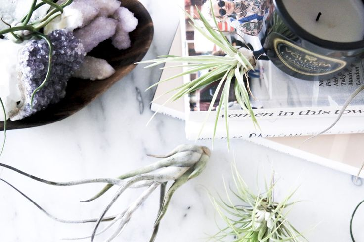 THE AIR PLANTS INVASION OF THE APARTMENT | Petra Gregersen