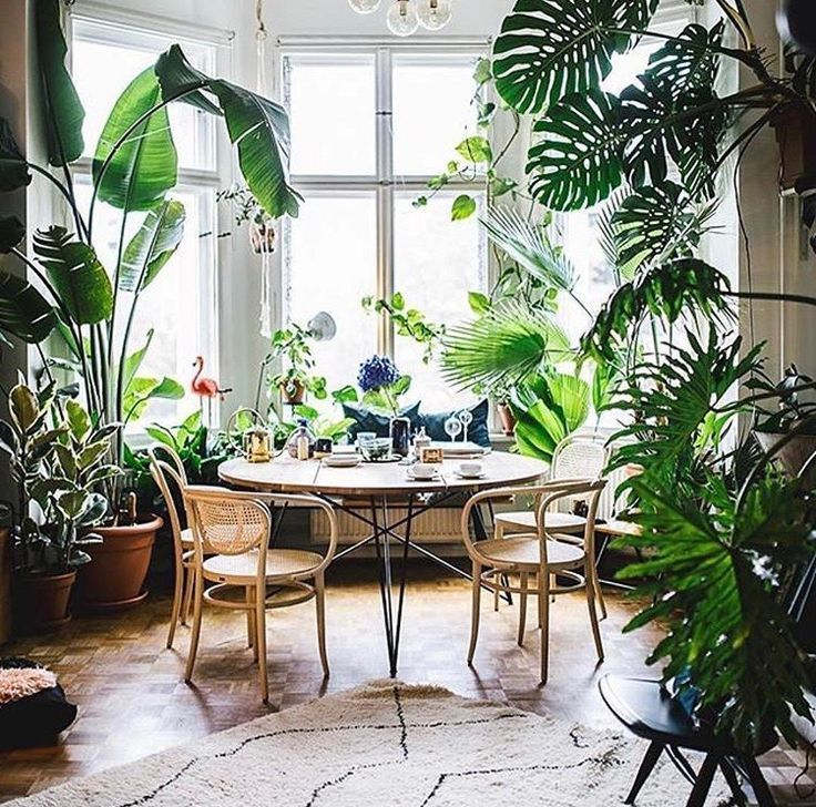 Interior Plants Design Small Indoor Plants Plant Decor Interior Plants