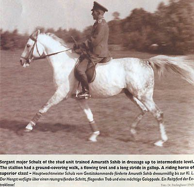 AMURATH SAHIB (35 Amurath II x Sahiba, by Nana Sahib I) 1932 grey stallion bred by Breniow   Arabian Album: Polish Arabian Horses   Hypoint   Fotki.com, photo and video sharing made easy. public.fotki.com400 × 386Search by image AMURATH SAHIB (35 Amurath II x Sahiba, by Nana Sahib I) 1932 grey stallion bred by Breniow