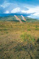 Las adversas condiciones ambientales de la región generan un paisaje altamente erosionado, lo que dificulta la utilización de estos suelos para actividades agrícolas. El suelo presenta una escasa cobertura de pastos.