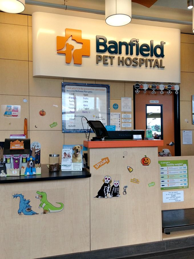 Every Day is National Dog Day at Banfield Pet Hospital