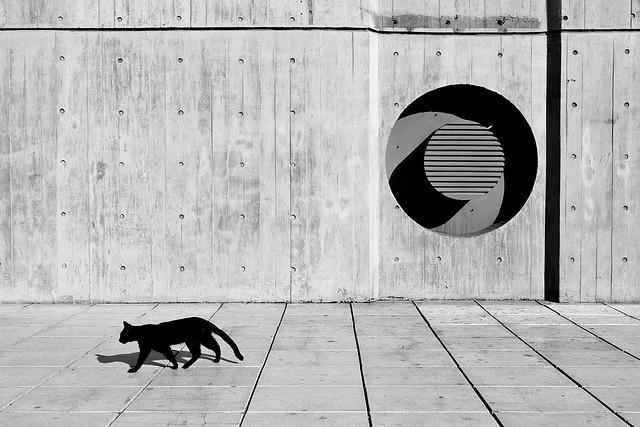 black cats rock