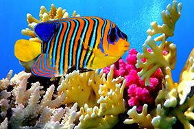 Vissen Tropisch kalender / Tropical Fish calendar / Poissons Tropicaux calendrier / Tropischen Fischen Kalender