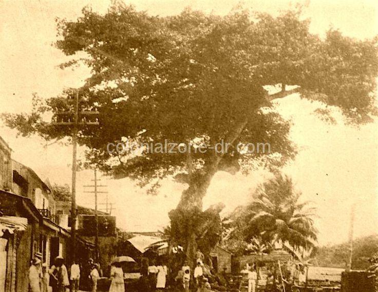 La ceiba de Cristóbal Colón. En el tronco de este árbol fue donde Cristóbal Colón amarraba sus carabelas cuando atracaba en el puerto de Santo Domingo. Si alguien sabe en qué año se secó favor de compartir esa información, se lo agradecería. Ahora tan solo existe la parte inferior del tronco.  SANTO DOMINGO   Galería de Imágenes del Ayer - Page 41 - SkyscraperCity