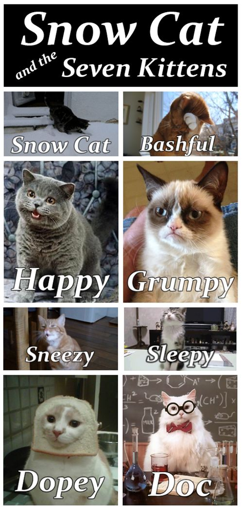snowcat! + seven kittens