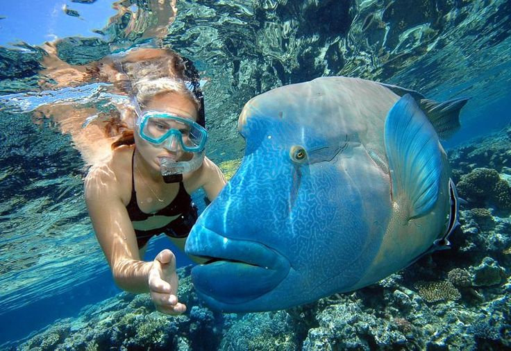 With more than 100 ways to experience the Great Barrier Reef, Tropical North Queensland offers the ultimate personalised adventure on the world's largest and most spectacular coral reef system. #reef #cairns
